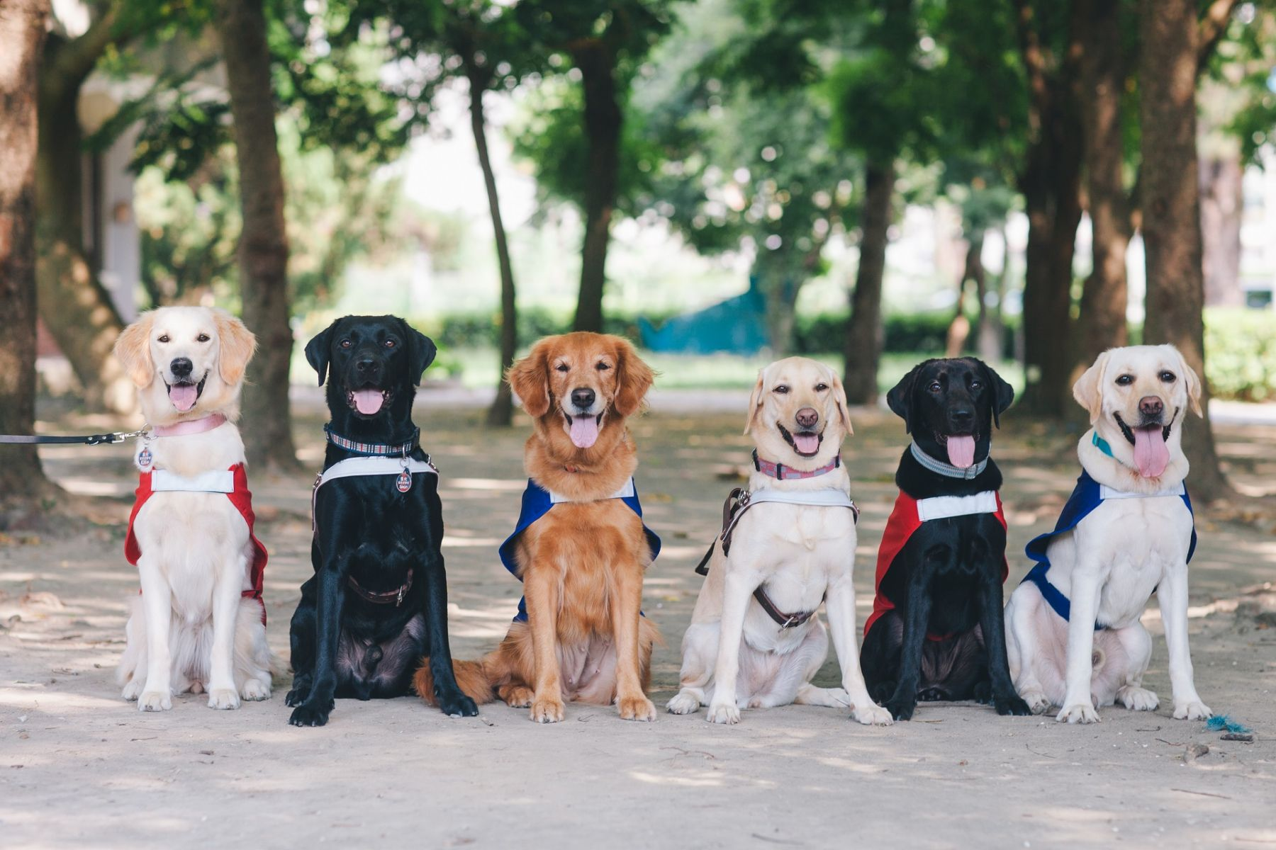 ▲據了解,一隻導盲犬的培訓得花上至少80萬至120萬不等的高額費用,但為了讓每位盲友都有機會可使用,因此皆是免費申請。每隻導盲犬的訓練養成,近乎都仰賴社會大眾的愛心捐款而成的。(圖片提供/惠光導盲犬教育基金會)