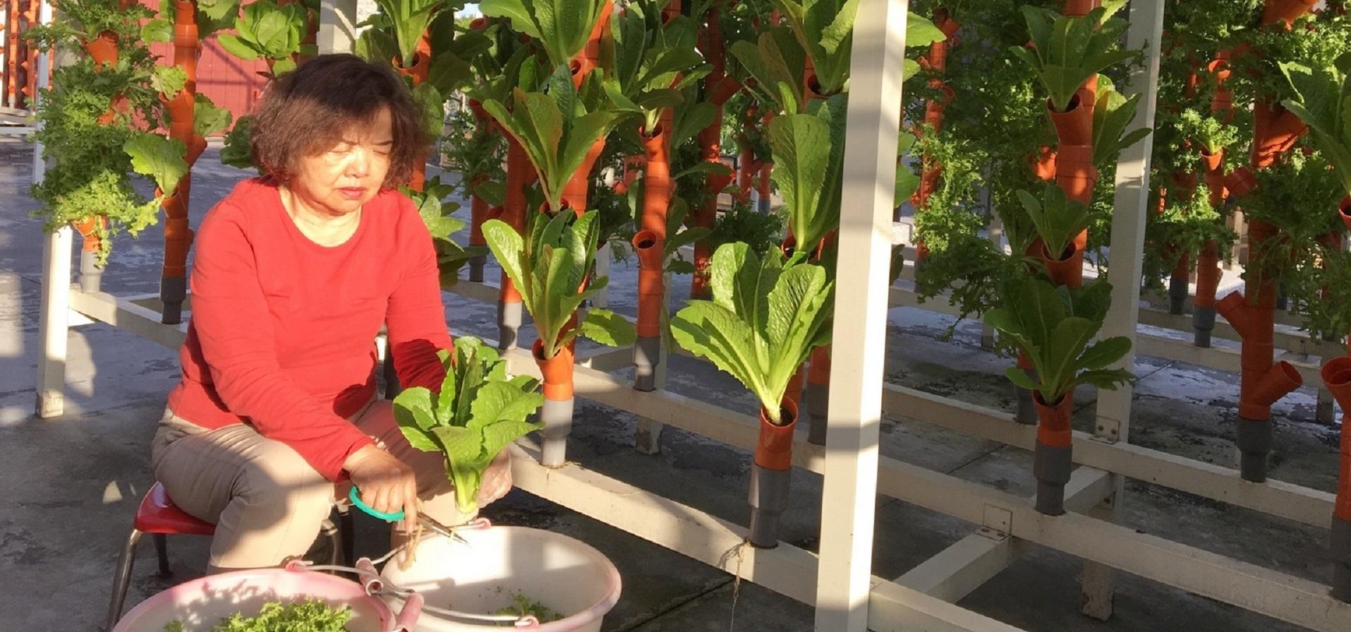 阿公、阿嬤屋頂蓋開心農場 還製作短片臉書分享