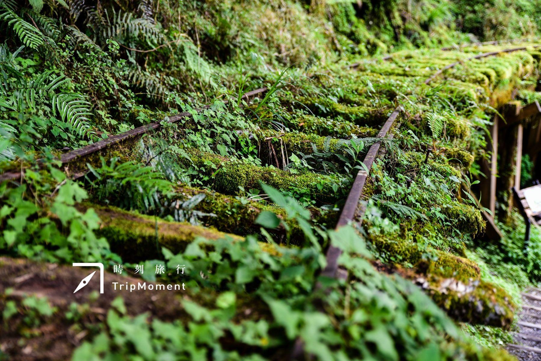 宜蘭見晴懷古步道》走進蓊鬱太平山,世界級美景在眼前展開