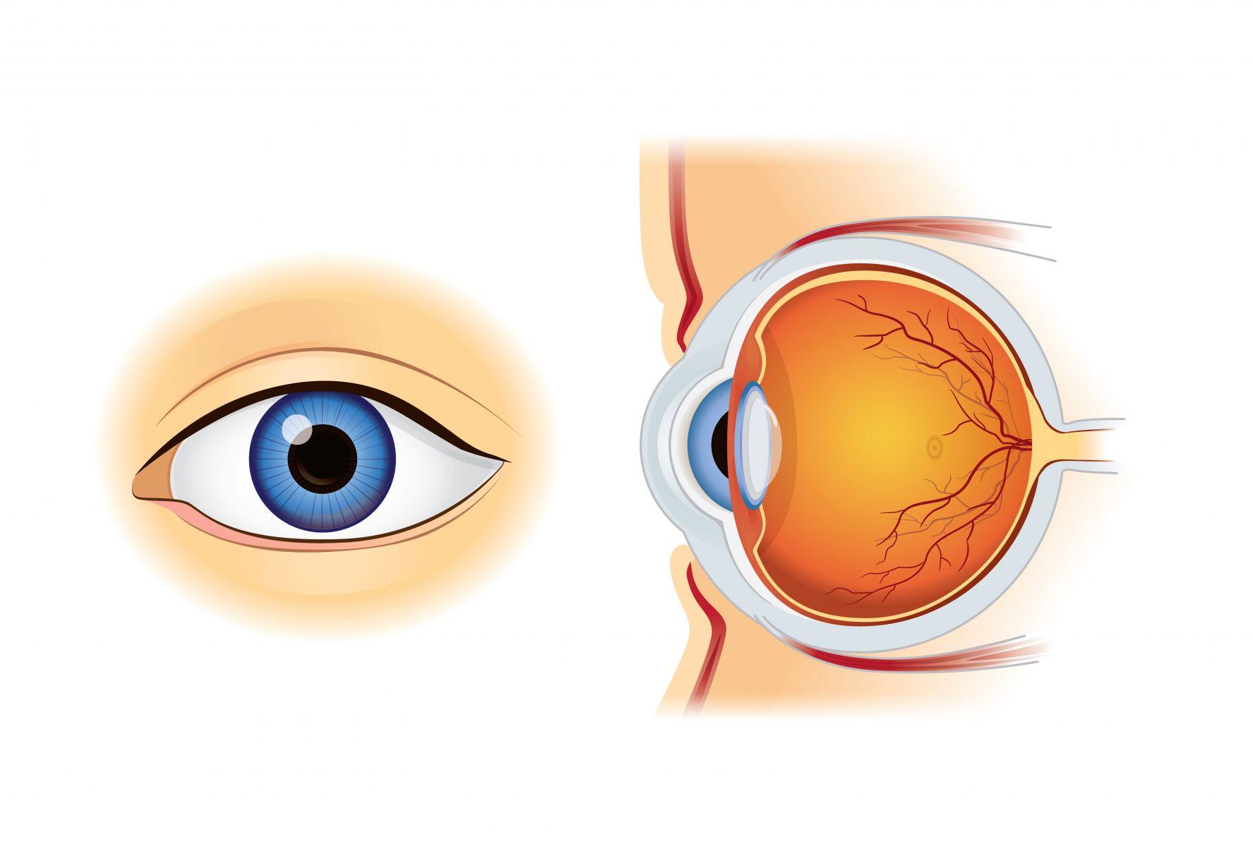 「視神經萎縮」靠眼針療法!安全性高、治癒力佳