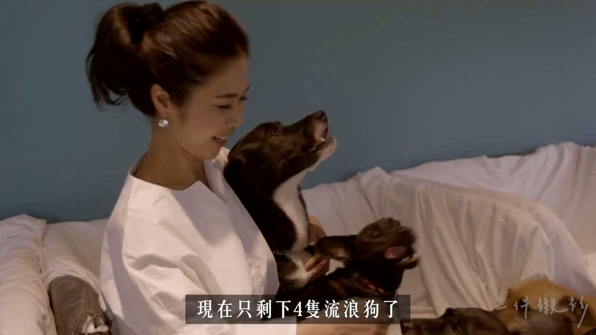 10年救千隻流浪狗,每年醫療費燒200萬...她說:看見你們撲向我,就是最幸福的事