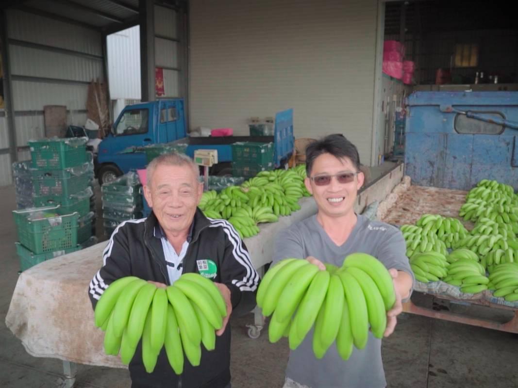 台灣產的烏龍蕉在東京造成轟動 NHK特地飛雲林採訪
