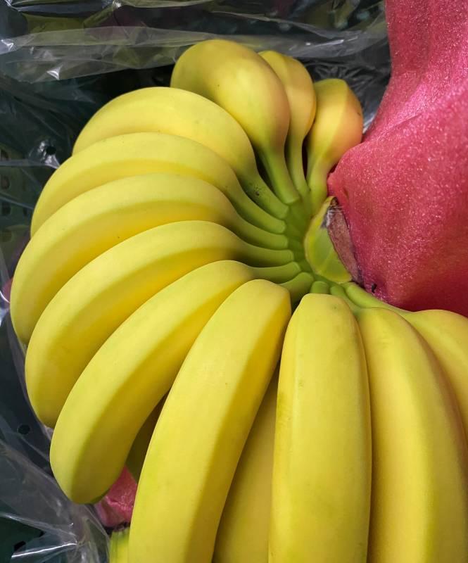 莿桐果菜生產合作社出產的黃金烏龍蕉。