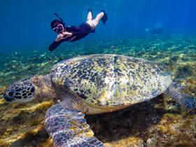 每5隻海龜就1隻受傷 海龜姊姊呼籲共同守護牠們