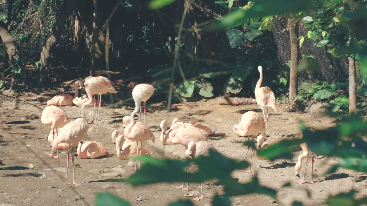 資深保育員張天勇在臺北市立動物園照養過的鶴群。