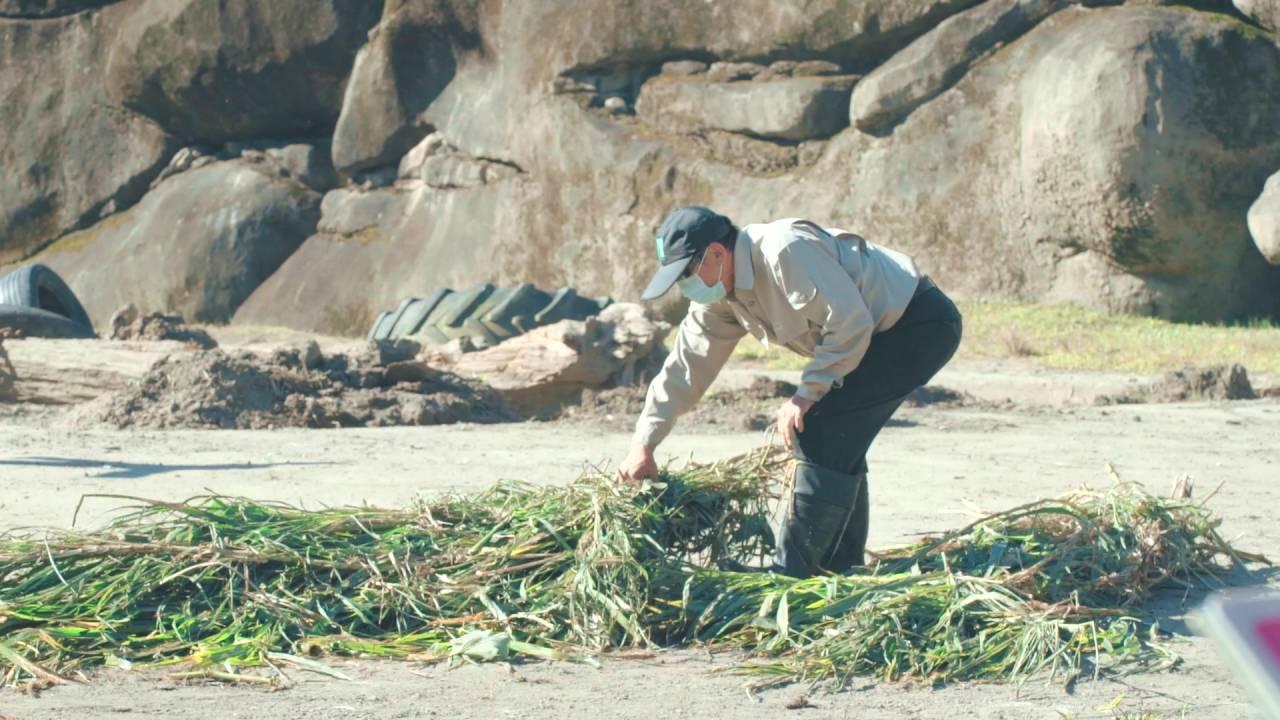 張天勇一早在臺北市立動物園正準備大象的食物。