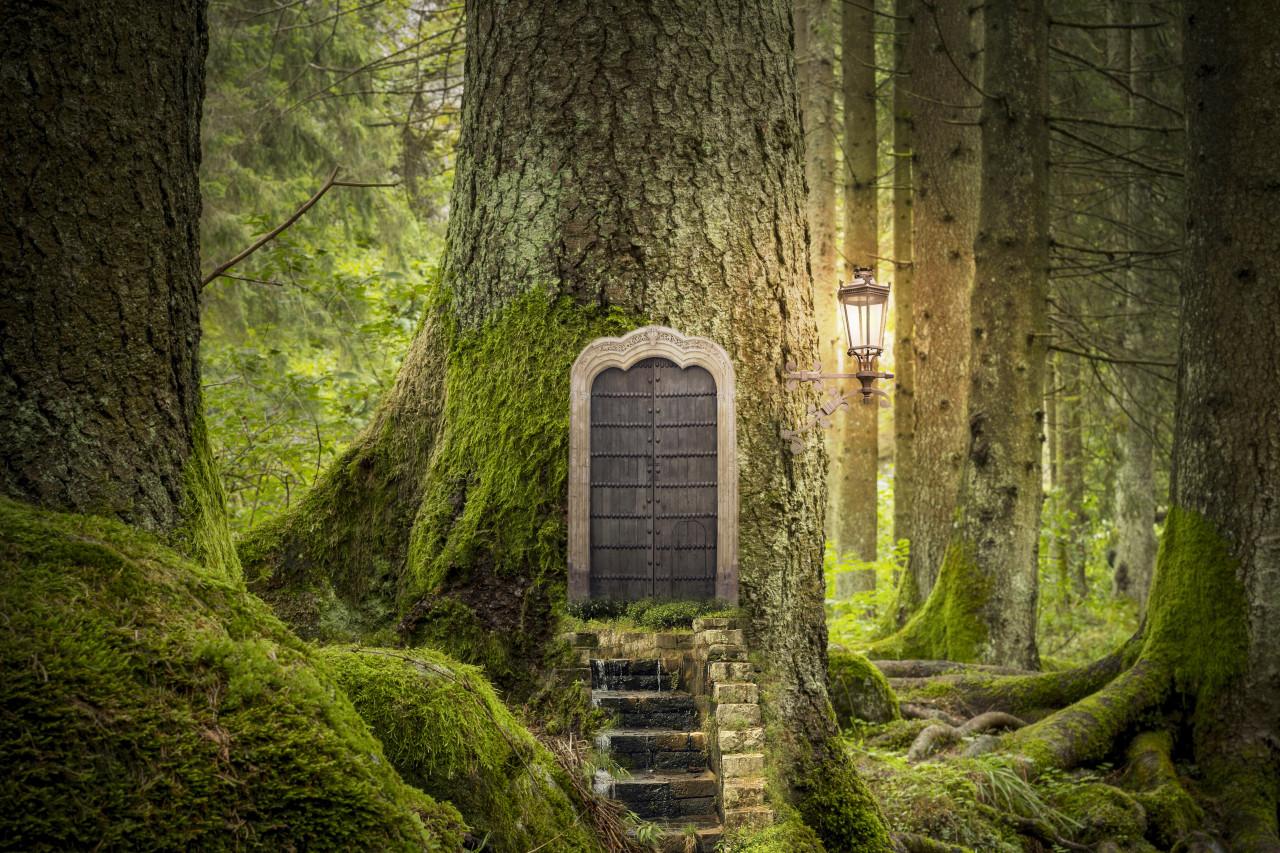 打造一座森林裡的秘密小屋,逃離都市叢林,我就像一頭野獸,終於自由了