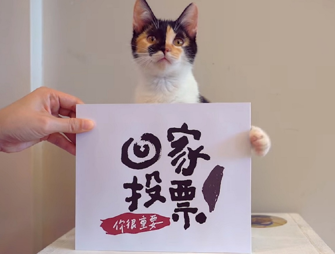 賣萌催票有一套!喵星人向貓奴喊話「你很重要,快去給我投票」
