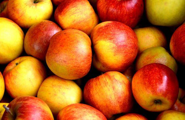 歐洲研究:蘋果番茄可以修復肺損傷