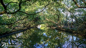 台南四草綠色隧道》不出國,也能搭船暢遊「亞馬遜森林」