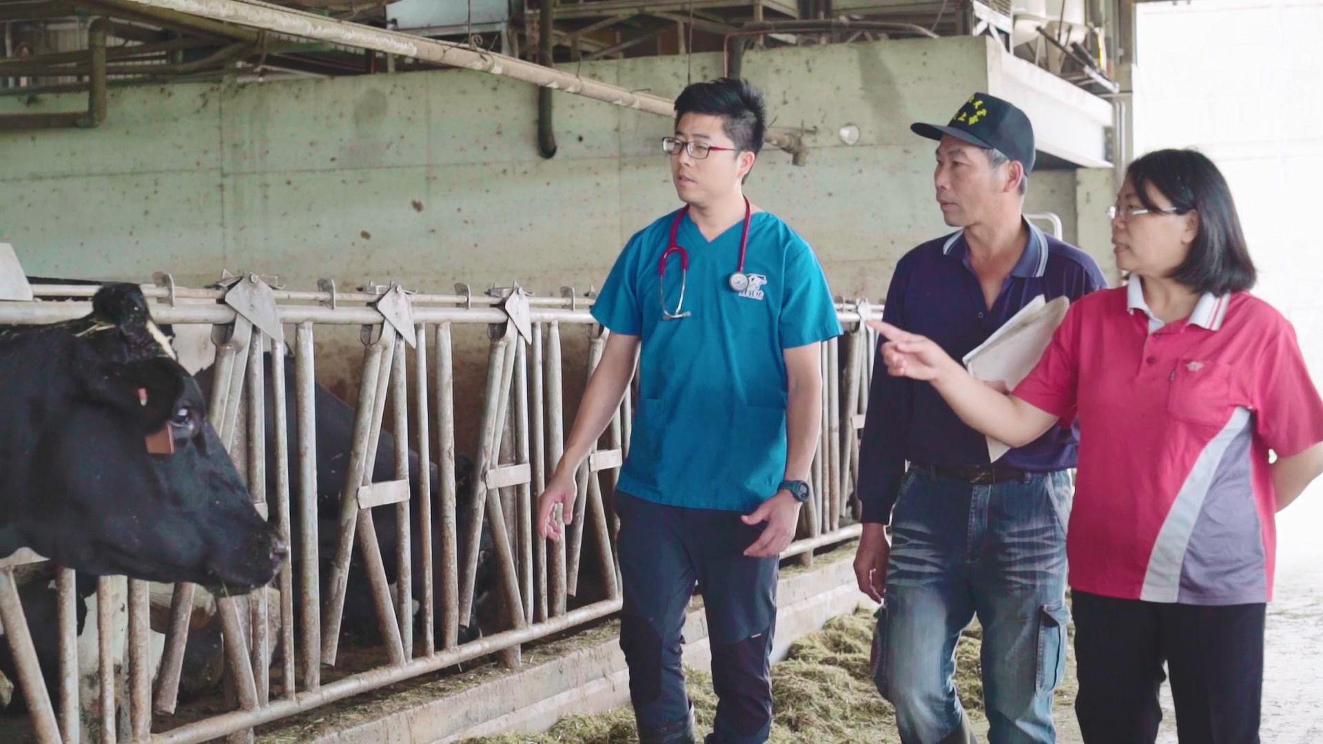 返鄉投入酪農產業的陳界全夫婦,從完全不懂的外行人到酪農界的模範生,他們投注了許多精力。
