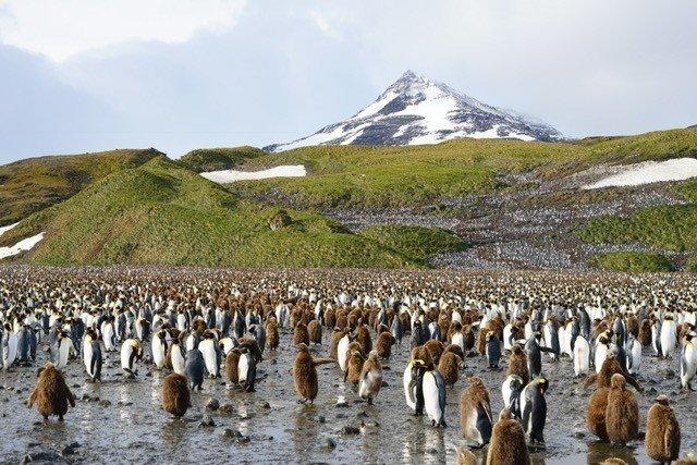 「天涯海角最後一站」姚謙:南極是不可替代的